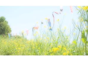 投稿者様:新井様 タイトル:菜の花こいのぼり